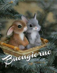 Baby Animals Super Cute, Cute Baby Bunnies, Cute Little Animals, Cute Funny Animals, Cute Cats, Cutest Bunnies, Baby Animals Pictures, Cute Animal Photos, Cute Animal Drawings