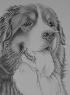 'Ted' #bernese #pencil #portrait
