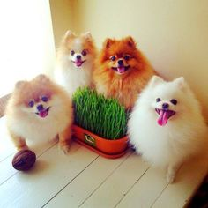 Adorable puffy Poms!