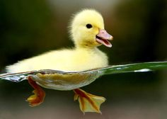 Cute as duck