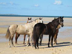 Horses of Mozambique! #104Horses