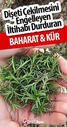 Medicinal Plants, Kraut, Herbalism, Food And Drink, Herbs, Health, Peek A Boos, Botany, Salud
