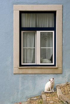 Lisbon, Portugal--tons of random cats!Lisbon, Portugal--tons of random cats! Pale Blue Walls, Through The Window, White Cats, Black Cats, Cats And Kittens, Cats Bus, Ragdoll Kittens, Funny Kittens, Tabby Cats