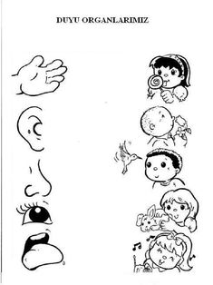 Risultato immagini per els sentits primero primaria English Worksheets For Kindergarten, 3rd Grade Math Worksheets, Science Worksheets, Language Activities, Classroom Activities, Learning Activities, Preschool Activities, Number Writing Practice, Tot School