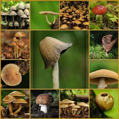 very poisonous mushrooms | Mushrooms Types & Nutritional Value | Sweet Additions