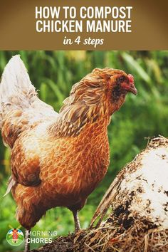 Gardening Compost Chicken Manure Fertilizer - If you're raising chickens and growing garden, you can save money by using the manure as fertilizer. Learn how to compost chicken manure in 4 steps. Keeping Chickens, Raising Chickens, Pet Chickens, Rabbits, Chic Chic, Chicken Garden, Chicken Coops, Chicken Breeds, Farm Chicken