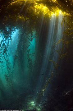 Blue Planet II: New pictures from David Attenborough's latest series – CBBC Newsround Underwater Photography, Nature Photography, New Pictures, Cool Photos, Blue Planet Ii, Kelp Forest, Forest Art, Nature Aesthetic, Fantasy Landscape