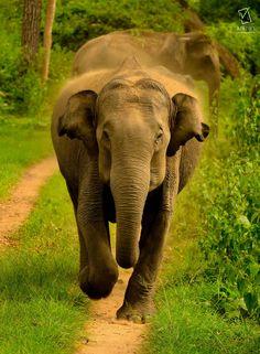 CHAAAAARGE !!! by varun aditya on 500px
