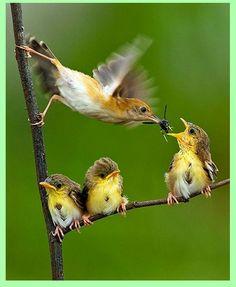 Bebek kuşların beslenme zamanı