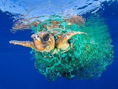 Caretta Caretta Trapped _ Nature - First Prize, Singles A sea turtle entangled in a fishing net swims off the coast of Tenerife, Canary Islands, Spain. _ © Francis Pérez World Press Photo World Photography, Photography Awards, Wildlife Photography, Tenerife, Ocean Pollution, Plastic Pollution, Best Nature Images, Nature Photos, World Press Photo