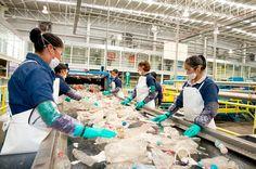 Índice de Productividad Laboral disminuye en segundo trimestre, según cifras del Inegi