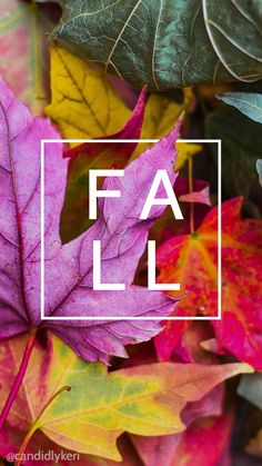 Fall leaf leaves colorful nature wallpaper you can download for free on the blog! For any device; mobile, desktop, iphone, android!