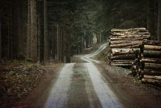 Dirt road through a forest Wolverine, Gravity Falls, Forest Path, Forest Road, Dark Forest, Southern Gothic, A Series Of Unfortunate Events, Tumblr, The Ranch
