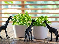 Girafas de plástico pintadas com tinta acrílica preta, fazendo uma boquinha na horta caseira