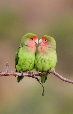 View our Birding Photo Gallery of Africa, full of wonderful, vibrant images of birds. Our team has captured some amazing pictures of many birds. Love Birds Pet, Cute Birds, Pretty Birds, Beautiful Birds, Animals Beautiful, Exotic Birds, Colorful Birds, Bird Pictures, Animal Pictures