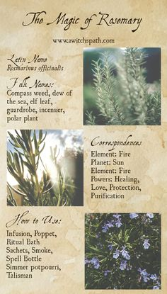 The Magic of Rosemary on A Witch's Path