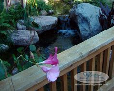 Call Reflections Water Gardens at (815) 955 4911 to get started on your new #Koi #Pond or #Waterfeature!