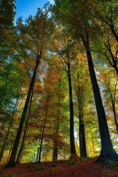 Photograph Fall is back by Jean-Francois Chaubard on 500px