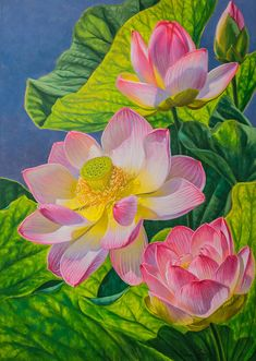 """'Pink Lotuses', Fiona Craig, oil, 42"""" x 30"""" x 1.5"""". Original #painting and PRINTS IN MANY SIZES at www.FionaCraig.com"""