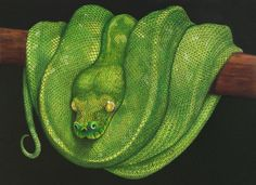 Green Tree Python. From Intricate Ink Animals In Detail Volume 2. A coloring book by Tim Jeffs. Colored by Jacqueline Noordijk.