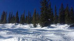 Colorado-Mischung in blau-weiß und grün: Buckel und Bäume bis auf dreieinhalbtausend Metern