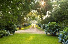 Pots of Hydrangeas line a driveway, giving it definition.