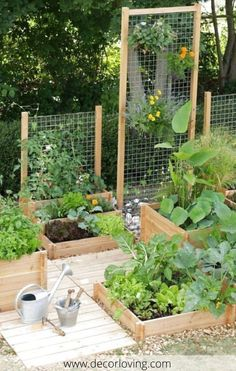 There are many factors to consider when planting a vegetable garden. garden edging 20 Best Small Vegetable Garden Design Ideas For Backyard Garden Backyard Vegetable Gardens, Vegetable Garden Design, Outdoor Gardens, Herbs Garden, Vegetables Garden, Small Backyard Landscaping, Landscaping Ideas, Small Backyard Design, Backyard Privacy