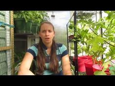 ▶ Using A Greenhouse to Heat Your House, This Is So Cool!!! - YouTube= This greenhouse is connected to her house & she uses a fan to move the heat to her house-amazing