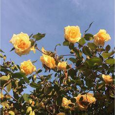 Search Yellow Aesthetic Flowers Field California Sky on Garden Beauty Aesthetic Flowers Ideas Images Esthétiques, Disney Instagram, Instagram King, Flower Aesthetic, Aesthetic Yellow, Music Aesthetic, Aesthetic Pastel, Summer Aesthetic, Aesthetic Grunge
