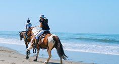 Galloping horses on the beach Horse Stalls, Horse Barns, Horses, Beach Day, Beach Trip, Horse Training Tips, Horse Tips, Natural Horsemanship, Horse Grooming