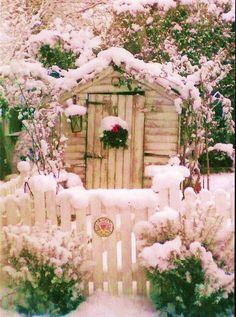 #Snow & Scattered Frost ... #snow #frost #shed #blossoms
