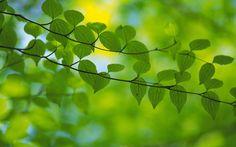 hojas wallpapers - Buscar con Google
