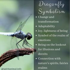 Dragonfly Spirit Animal & Totem The dragonfly totem carries the wisdom of transformation and adaptability in life. As spirit animal, the dragonfly is connected to the symbolism of change and light. When the dragonfly shows up Dragonfly Meaning Spiritual, Dragonfly Symbolism, Dragonfly Quotes, Dragonfly Images, Dragonfly Art, Spiritual Meaning, Spiritual Enlightenment, Animal Meanings, Animal Symbolism