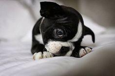 5 Adorable newborns ~ The Pet's Planet 4/5