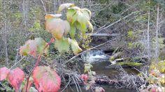 Amazing little creeks. Photos taken in September 21, 2016. Houston, BC. Photos by Brian Vike, Houston, British Columbia.