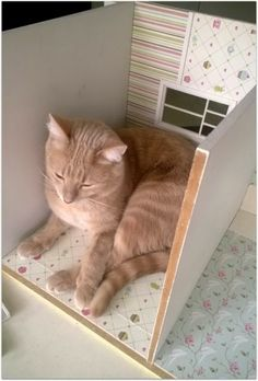 Love it when our miniature homes become our cats homes too!!! Söpökatu