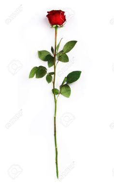 Single long stem rose rose single stem 150x150 flowers for Long stem rose tattoo
