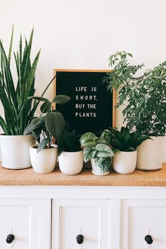 life is short, but the plants letterboard House Plants Decor, Plant Decor, Indoor Garden, Indoor Plants, Indoor Cactus, Potted Plants, Cactus Plants, Balcony Gardening, Buy Plants