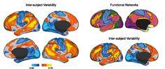 Perché siamo tutti così diversi  Uno studio pubblicato su Neuron svela quali sono le regioni cerebrali più variabili tra gli individui. E spiega i motivi per cui ognuno di noi pensa e si comporta in modo unico  Leggi l'articolo su Galileo (http://www.galileonet.it/articles/511225f2a5717a745300007b)  Credits immagine: Neuron, Mueller et al. Doi: 10.1016/j.neuron.2012.12.028