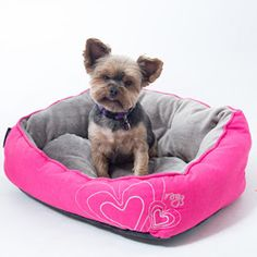 Valentine's Day Gifts for Dogs & Dog Lovers | Australian Dog Lover