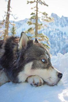 souhailbog: Dreams of Winter snows to come| Amanda Tromp