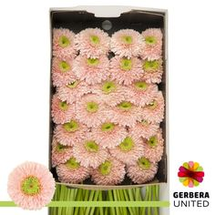 Gerbera, Flower Power, Create Your Own, The Unit, Flowers, 50 States, Dutch, Wednesday, Boxes