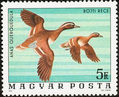 Garganey stamps - mainly images - gallery format Postage Stamp Design, Postage Stamps, Old Stamps, Wild Creatures, Stamp Collecting, Cat Art, Birds In Flight, Royalty Free Images, Gallery
