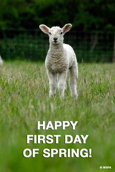 Happy first day of spring! (and huge thanks to all of our supporters, who make it possible for us to work toward ending animal cruelty.)