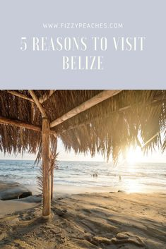 5 reasons to visit Belize - from beautiful beaches to adventures in the jungle, Belize has it all!   Fizzy Peaches | Brighton Parenting, Lifestyle and Food Blog