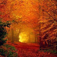 Landscape Photography, Nature Photography, Beautiful Places, Beautiful Pictures, Autumn Scenes, Autumn Forest, Autumn Nature, Fall Pictures, Fall Photos