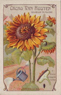 Vintage Seed & Garden Art