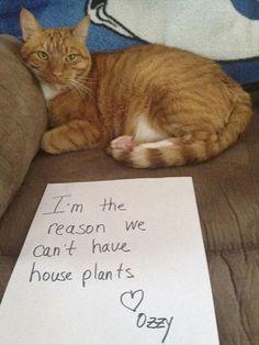 """Cat Shaming"""