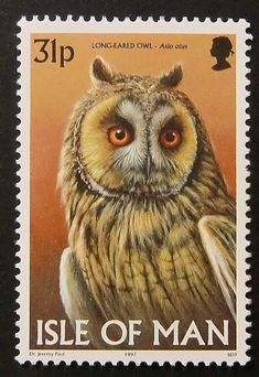 Items similar to Long-Eared Owl Asio otus Isle Of Man -Handmade Framed Postage Stamp Art 8084 on Etsy Long Eared Owl, Paper Owls, Postage Stamp Art, Vintage Stamps, Owl Art, Stamp Collecting, Bird Feathers, Birds, Owls