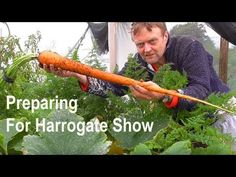 Allotment Diary : Harvesting some Veg for Harrogate Show Allotment Diary : Harvesting some Veg for Harrogate Show. Digging up the giant potato and pulling some of the carrots for the show.